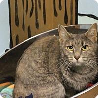 Adopt A Pet :: Daisy - West Des Moines, IA