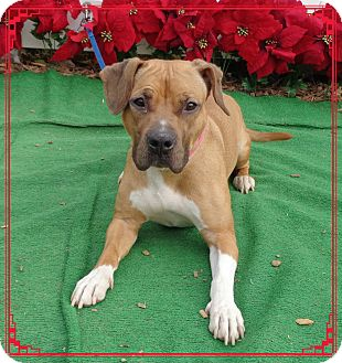Boxer Mix Dog for adoption in Marietta, Georgia - WAVY (R)