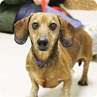 Adopt A Pet :: Grandpa - Elyria, OH
