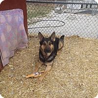 Adopt A Pet :: Cappy - Quincy, IN