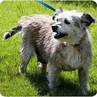 Adopt A Pet :: Baby - Winder, GA