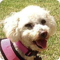 Adopt A Pet :: Bonnie - La Costa, CA