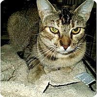 Adopt A Pet :: Abigail - San Ramon, CA