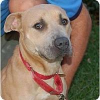 Adopt A Pet :: Jitterbug - Kansas City, MO