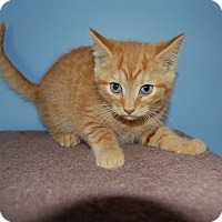 Adopt A Pet :: Dublin - McDonough, GA