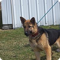 Adopt A Pet :: REMY - Tully, NY