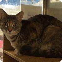 Adopt A Pet :: Franny - Byron Center, MI