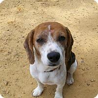 Adopt A Pet :: Scratch - Lancaster, OH