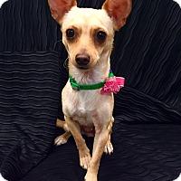 Adopt A Pet :: Leena - Encino, CA