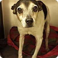 Adopt A Pet :: Bea - Fair Oaks Ranch, TX