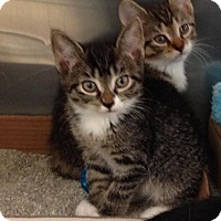 Adopt A Pet :: Cheerio - East Brunswick, NJ