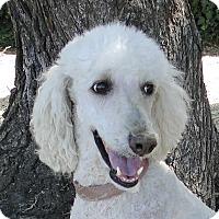 Adopt A Pet :: Peaches - Walnut Creek, CA