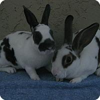 Adopt A Pet :: Wyatt & Westly - Bonita, CA