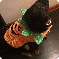 Adopt A Pet :: Tacoma - Nixa, MO