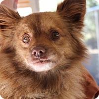Adopt A Pet :: Blink - Harmony, Glocester, RI