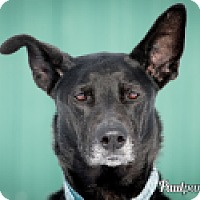 Adopt A Pet :: Bentley - High River, AB