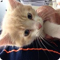Adopt A Pet :: Orioles - Camden, DE