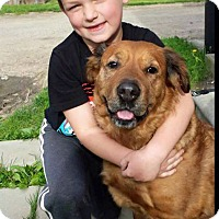 Adopt A Pet :: Lacey - Troy, MI
