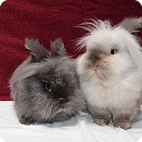 Adopt A Pet :: Rex - Fountain Valley, CA