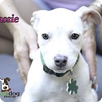 Adopt A Pet :: Cassie - Alpharetta, GA