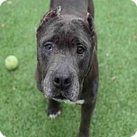 Adopt A Pet :: JACKIE - Atlanta, GA