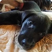 Adopt A Pet :: Caitlin - Charlestown, RI