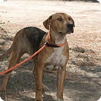 Adopt A Pet :: Simba - Ramona, CA