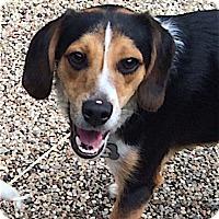 Adopt A Pet :: Ricky - Houston, TX