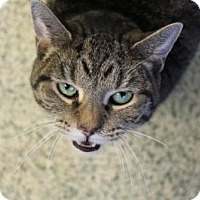 Adopt A Pet :: Filberta - Indianapolis, IN
