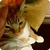 Adopt A Pet :: Vespa - Fallbrook, CA