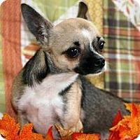 Adopt A Pet :: BeBe - Beavercreek, OH