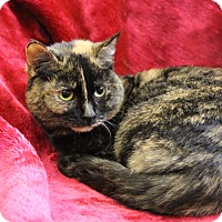 Adopt A Pet :: Sweetie Pie - Greensboro, NC