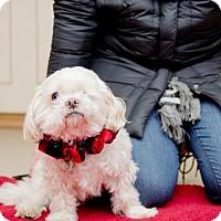 Adopt A Pet :: Poppi~Senior mush! - Caldwell, NJ