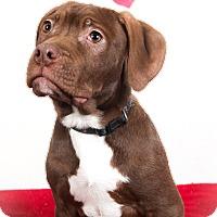 Adopt A Pet :: Dopey - Tehachapi, CA