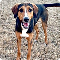 Adopt A Pet :: Smokey - McKinney, TX