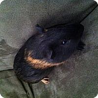 Adopt A Pet :: Leap (OCCH) - Fullerton, CA