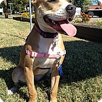 Adopt A Pet :: Nala - Richmond, VA