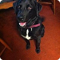 Adopt A Pet :: Valentina - Tunbridge, VT