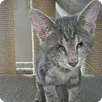 Adopt A Pet :: Smokey - Bayonne, NJ