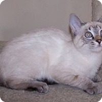 Adopt A Pet :: K-Tucker1-ZsaZsa - Colorado Springs, CO