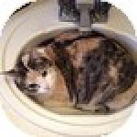 Adopt A Pet :: Talita - Vancouver, BC