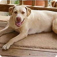 Adopt A Pet :: Nikki - E Windsor, CT