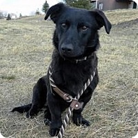 Adopt A Pet :: David - Cheyenne, WY