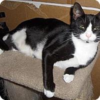 Adopt A Pet :: Chickadee - Richmond, VA