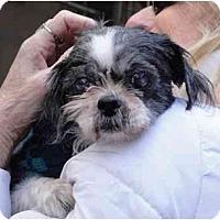 Adopt A Pet :: Shai - Long Beach, NY