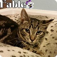 Adopt A Pet :: Fable - River Edge, NJ