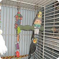 Adopt A Pet :: Benny, Barry, & BB - Neenah, WI