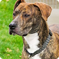 Adopt A Pet :: Dante - Meridian, ID