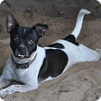 Adopt A Pet :: Aries - Pensacola, FL