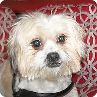 Adopt A Pet :: CJ - Memphis, TN